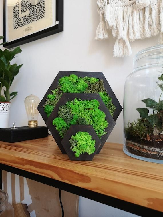 Hexagon Moss Frame Xs Preserved Moss Moss Art Home Decor Moss Wall Art Wood Objects Creative Idea Decorative Wall Live Moss