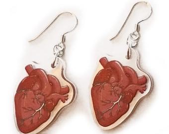 Anatomical Heart - Earrings