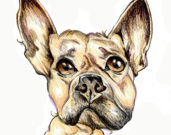 French bulldog caricature, special portrait printed in signed & limited edition. Art print based on an original drawing