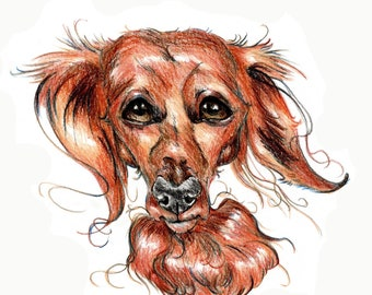 Dachshund caricature, special portrait printed in signed & limited edition. Art print based on an original drawing