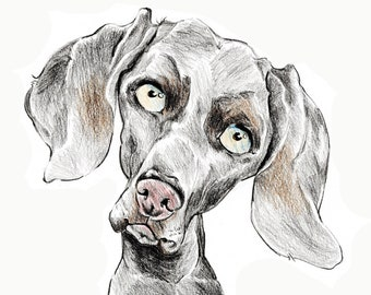 Weimaraner caricature, special portrait printed in a signed and limited edition. Art print based on an original drawing
