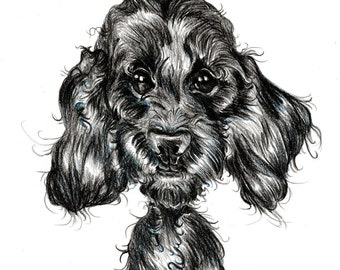 Labradoodle caricature, special portrait printed in a signed and limited edition. Art print based on an original drawing