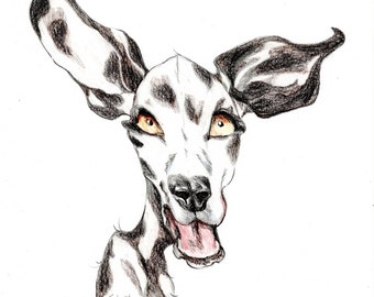 Dalmatian caricature, dog portrait printed in a signed and limited edition. Art print based on an original drawing