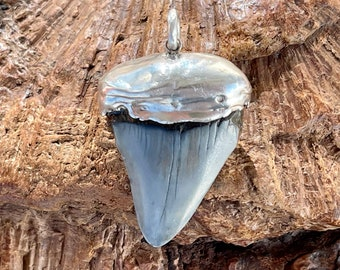 Shapely, petrified grey shark tooth with an unusual setting made of 925 silver, 4.8 cm
