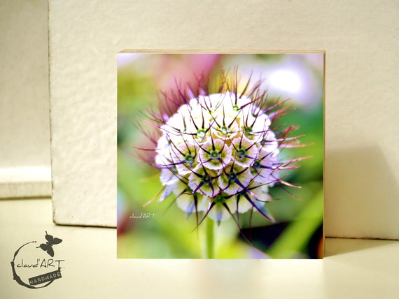 "Photo on wood 10x10 - ""Summer Meadow"" No.07"