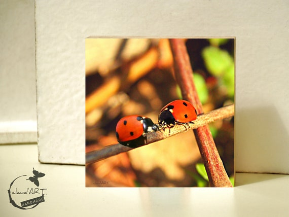 "Photo on wood 10x10-""Ladybug Couple"""