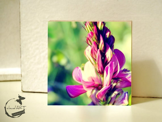 "Photo on wood 10x10-""Summer Meadow"" No. 17"