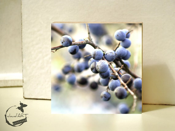 """Photo on wood 10x10-""""berries on twigs"""" No. 18"""