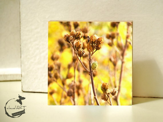 """Photo on wood 10x10-""""grasses in autumn Field"""" No. 17"""