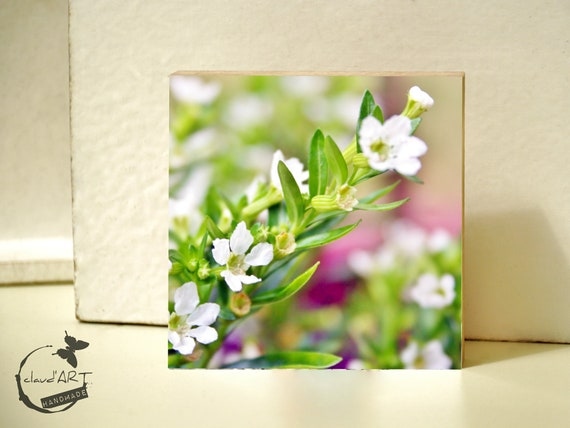 "Photo on wood 10x10-""Summer Meadow"" Nr. 02"