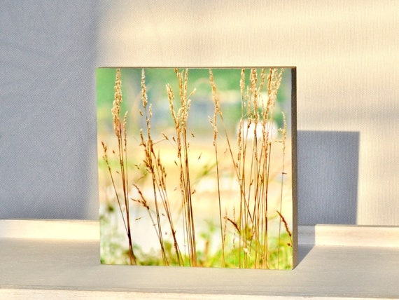 "Photo on wood 10x10 - ""Gräser Sommerwiese"" Nr.16"