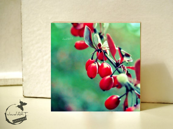 "Photo on wood 10x10 - ""Berries on branches"" No.20"