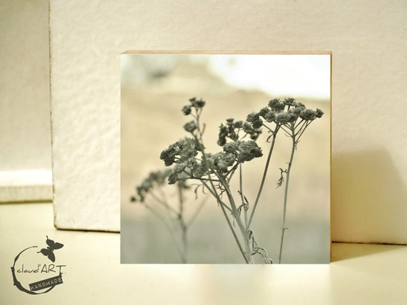 "Photo on wood 10x10-""grasses in the Autumn Field"" No. 04"