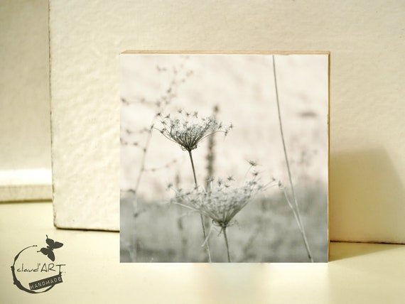 """Photo on wood 10x10-""""grasses in autumn Field"""" No. 02"""