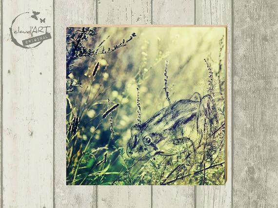 "Photo on wood 10 x 10 cm-daydreamer ""Frog"""