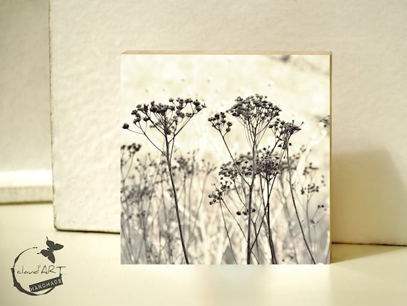 """Photo on wood 10x10-""""grasses in the Autumn Field"""" No. 01"""