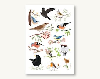Postcard Native birds
