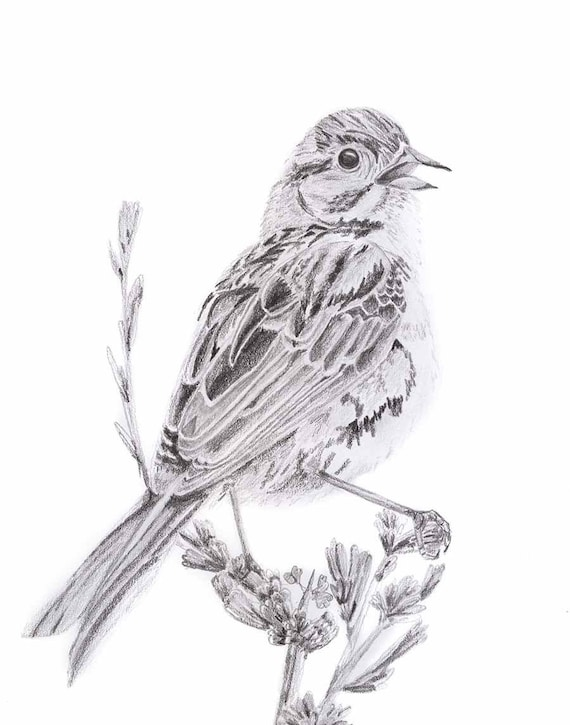 Oiseau Noir Et Blanc Dessin Doiseau Moineau Dessin Illustration Oiseau Ornithologues Téléchargement Numérique De La Faune Cadeau Damoureux De