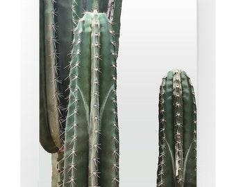 Cacti Framed Print, Photography Print, Original Fine Art Photography, Framed Succulent Print