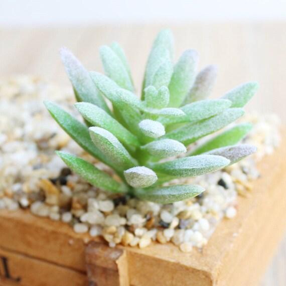 Artificial Succulents,Faux Succulents,Imitation Succulents,Succulent Cutting,Succulent Planters,Miniature Garden,DIY Floral Arrangements,F84