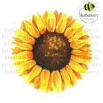 Watercolor PNG Sunflower Digital Download Clipart Cricut Cut Files Commercial Use