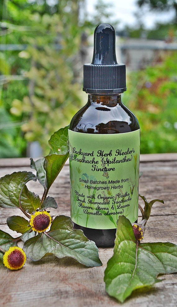 Toothache Spilanthes Tincture (Acmella oleracea) Health & Wellness for  Antiviral, Colic, Coughs, Colds and Flu