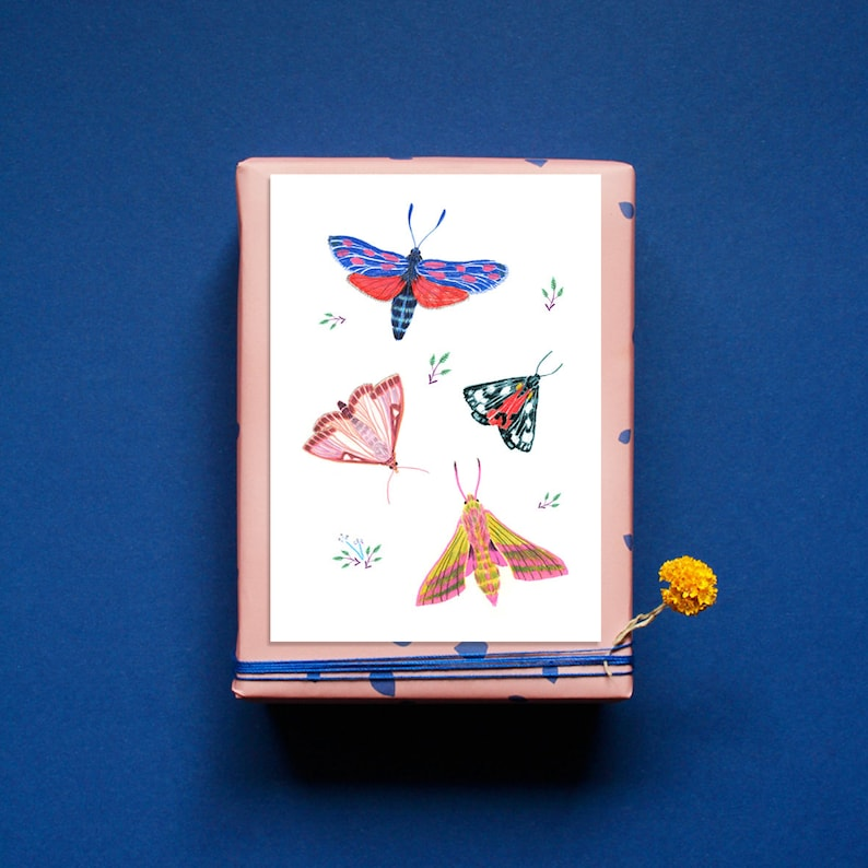 Postcard  Greeting Card  Moth  Butterfly  Insects  Nature image 0