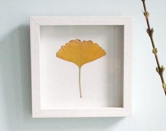 Botanical art, frame with pressed leaf, maidenhair tree, ginkgo, japanse art, brings luck!