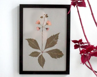 Botanical art, collage with leaf and flowers, pressed flowers, flowers art, Japanese cherry, cherry blossom, art with real flowers