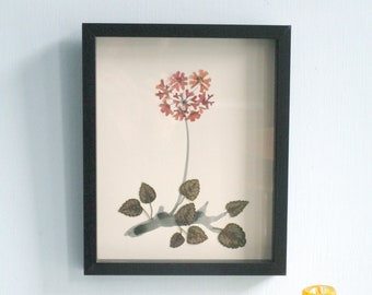Botanical art, collage with leaf and flowers, pressed flowers, flowers art, red catchfly, collage with real flowers