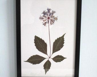 Botanical art, collage with leaf and flowers, pressed flowers, flowers art, Glory of the Snow, art with real flowers