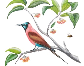 Art Print: Painted bee-eater on a branch with leafs and berries.