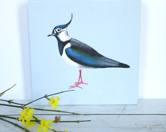 Painted lapwing on wood, bird paintings, painted birds, northern lapwing painting, birds on wood