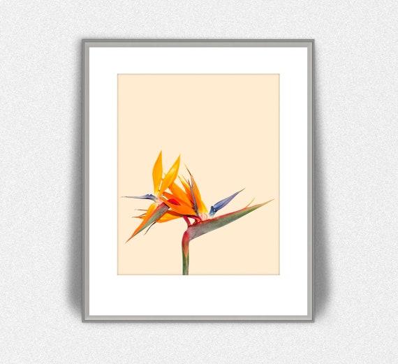 graphic relating to Printable Paradise known as Fowl of Paradise Printable, Moms Working day Reward, Higher than the Mattress Artwork, Strelitzia reginae Flower, California Wall Artwork, Botanical Print