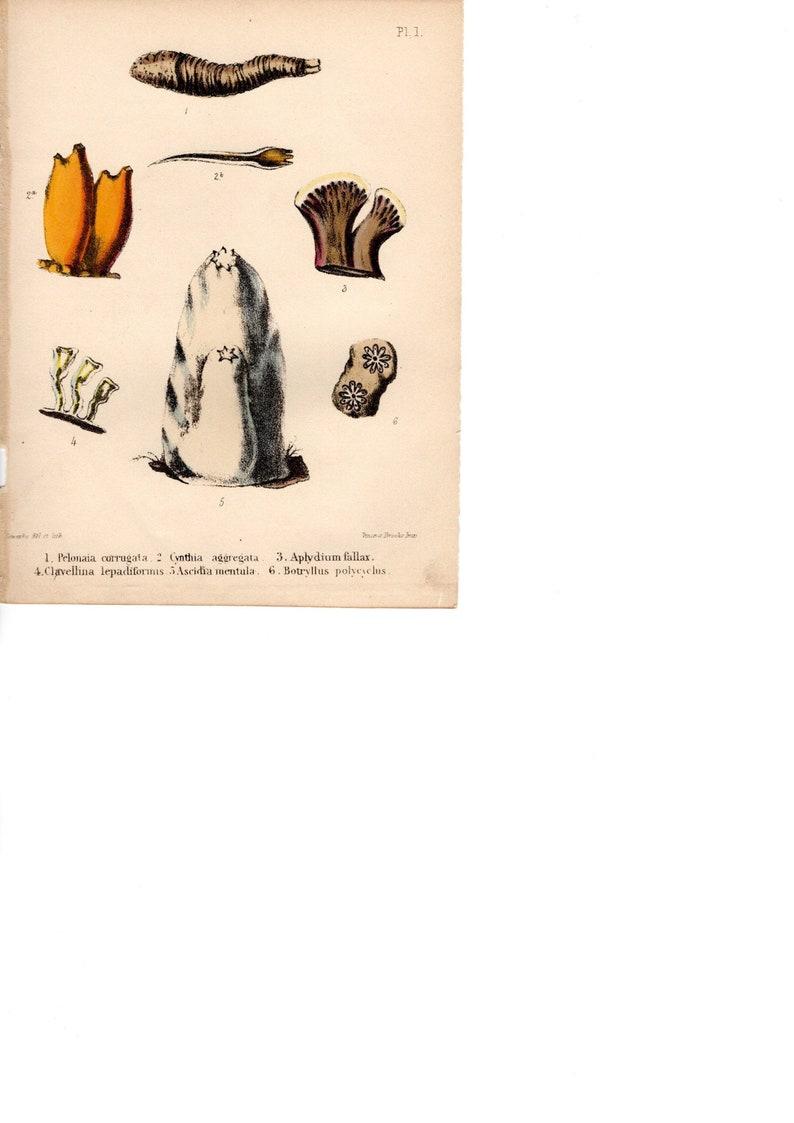 Lederstempel Punzierstempel C366 Punziereisen Leather Stamp