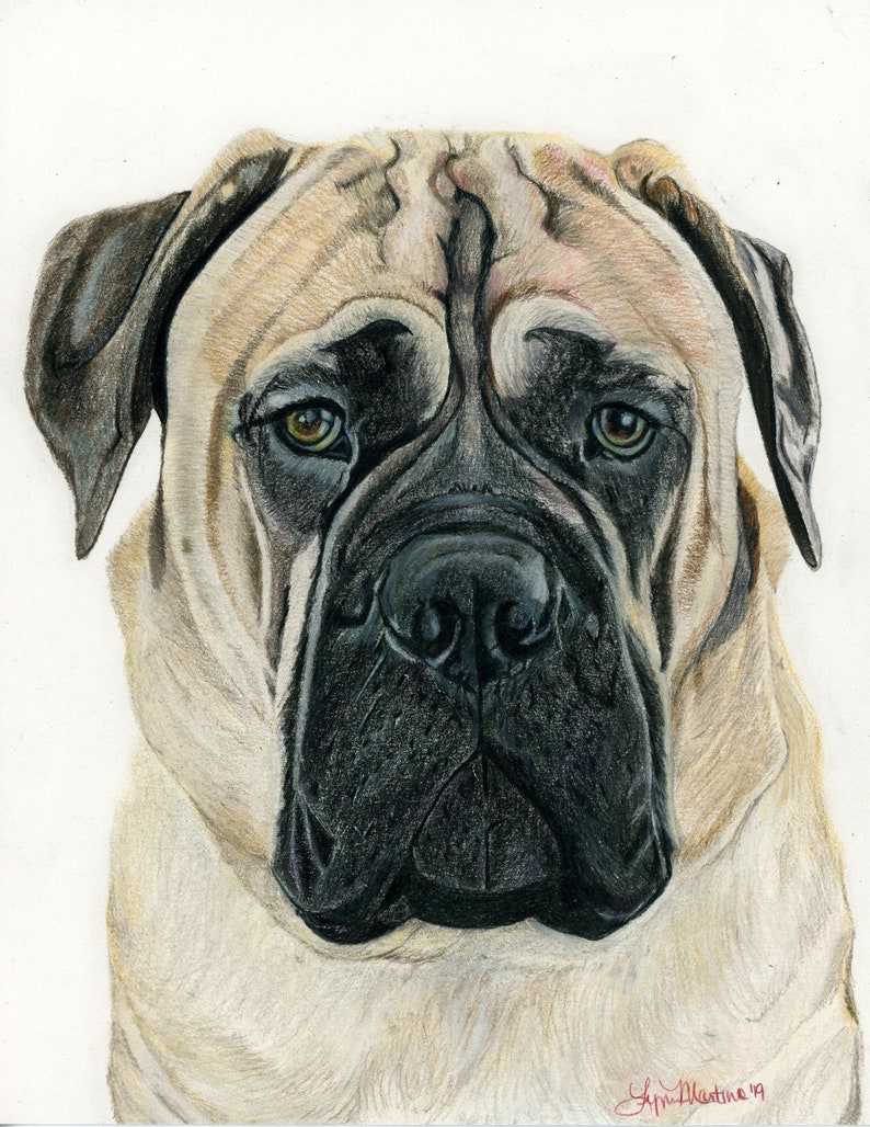 Custom pet portrait in colored pencil drawing from photo dog image 0