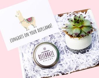 Congrats On Your Dipllama Card, Succulent and Candle Gift Box, Llama Graduation Card, Punny, Graduation Gift Box, Funny  Punny Card
