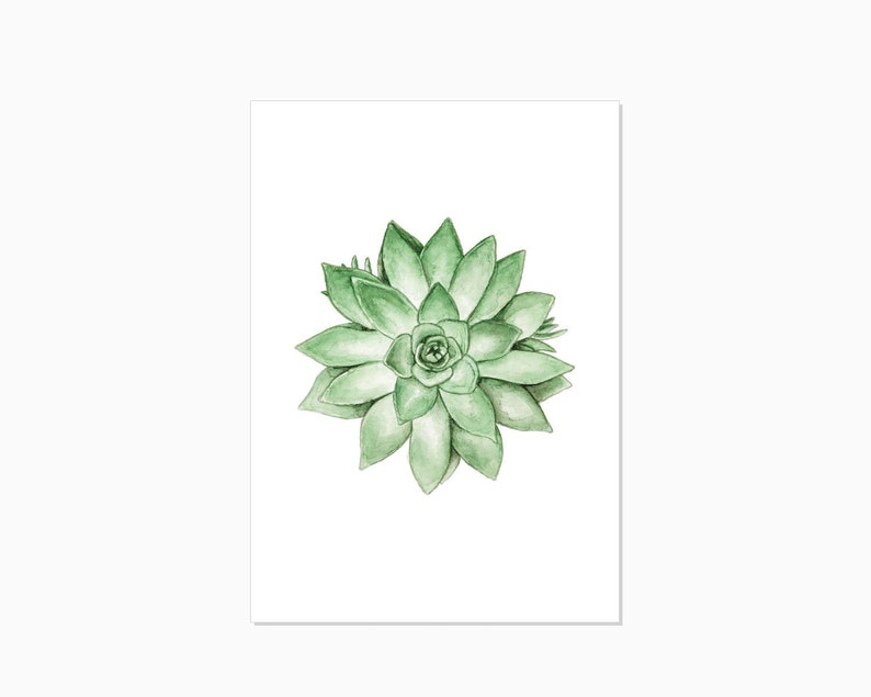 Art Print  SUCCULENT  high quality colorful FineArt Print  image 0
