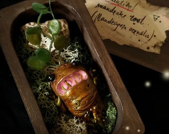 Mandrake baby with box [ no.2 ]  Witch herbs, Witch box, magic box, curiosity cabinet