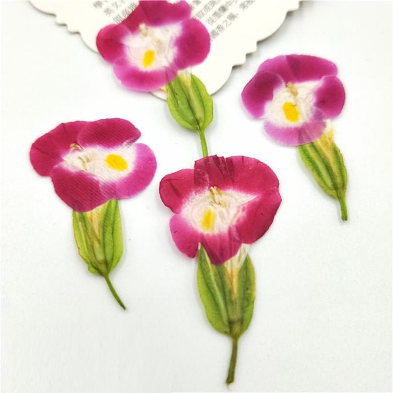 Multi Real Pressed Dried Flowers Leaves Resin Silicone Jewelry Mold Fillers