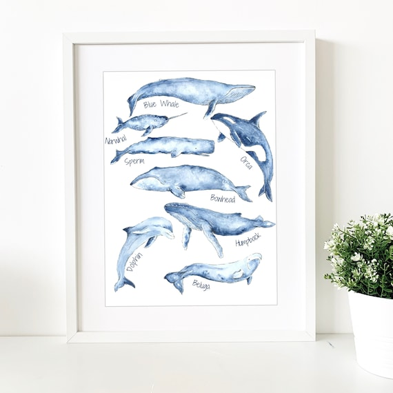 Marine Life Watercolour Poster with Text