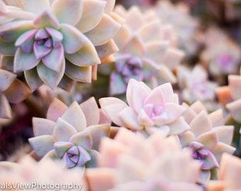 Succulent Photography / Succulent Print / Digital Download / Succulent Wall Art / Nature Print / Wall Art / Photography Print / Succulent