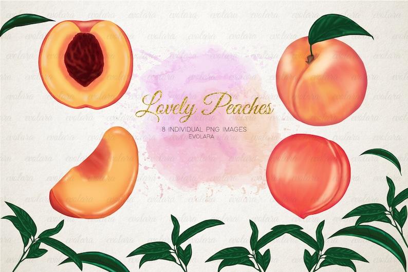 Peach Clipart Peaches Clipart Fruits Clipart Greenery Clipart Fruit Summer Pink Peach Branch Clipart Botanical Illustration