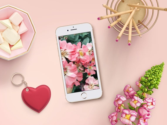 Cell Phone Wallpaper Pink Flowers Iphone Background Screensaver Smartphone Background Wallpaper For Phone Phone Lock Screen