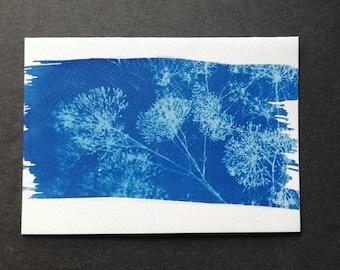 Postcard Veil herb