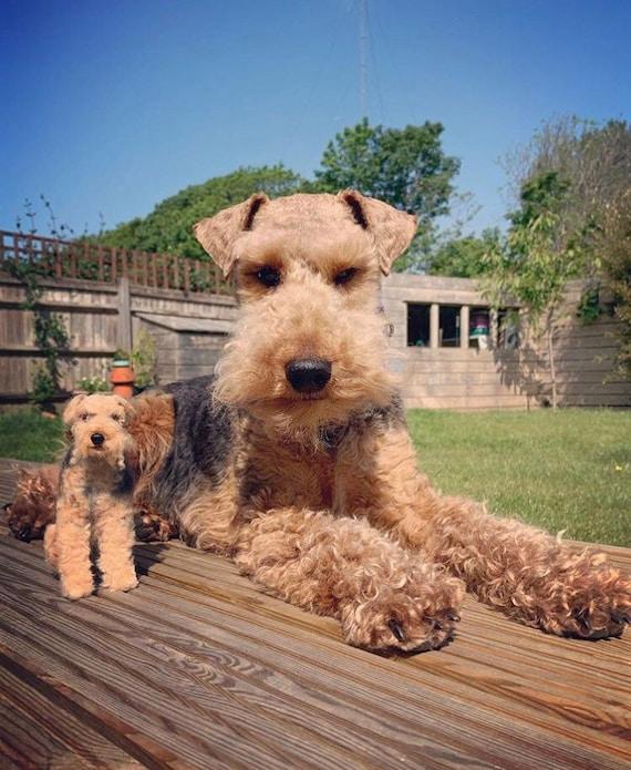 Welsh terrier miniature pet dog felted portrait