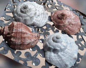 Concrete Shells Set of 4 Decoration House Bathroom Balcony Terrace Garden Pond