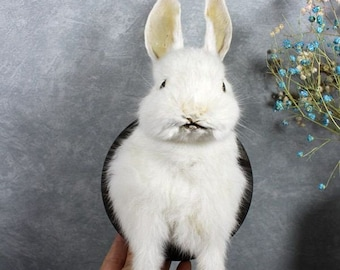 Taxidermy two headed rabbit pure white handmade freak bunny stuff mounted in glass dome birthday gift crafts display free shipping