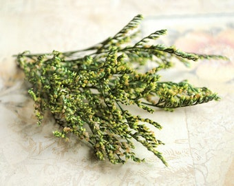 green preserved flowers