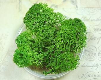 Moss-green preserved moss